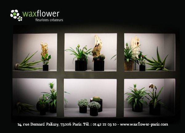 wax-flower-pub