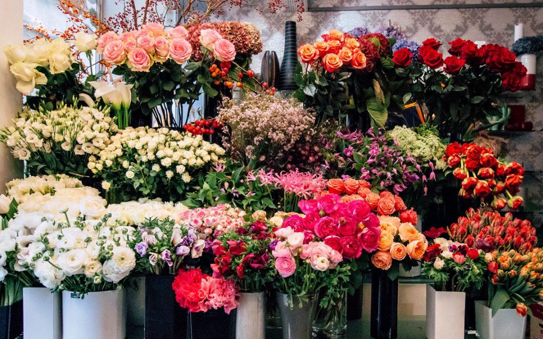 Waxflower:Flowers of good