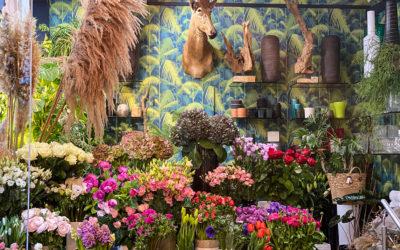 WaxFlower : un jardin d'Eden